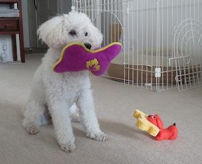犬と犬のスポンジホルダー写真